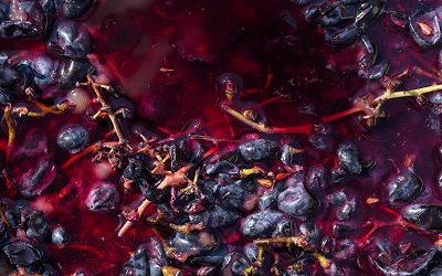 Close Up of Crushed Red Grapes in Fermentation Container