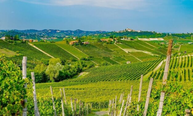 Moscato Wine – The Sweet Italian All-Rounder