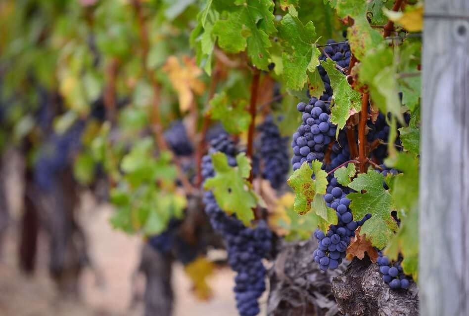 What Is Biodynamic Wine and Why Is It Different?