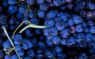 Cluster of Cabernet Sauvignon Grapes