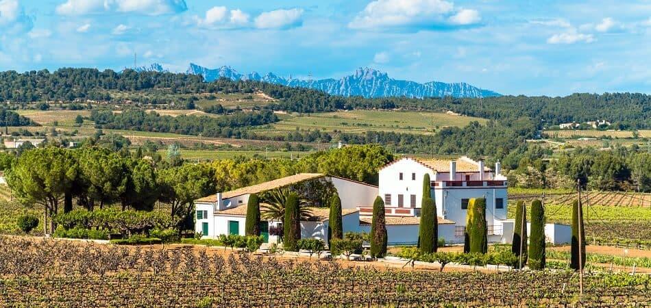 Vineyard in the Penedès Region in Catalunia, Spain