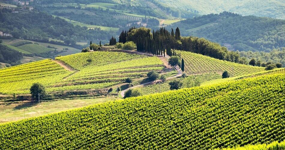Vineyard on a Hill in the Chianti Region