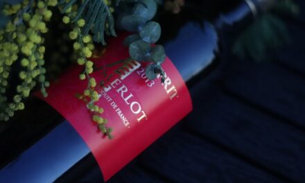 Merlot – The French All-Rounder Wine