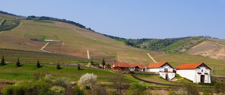 Tokaj Wine Region in Hungary
