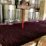 How Wine Is Made – The Basics of Winemaking