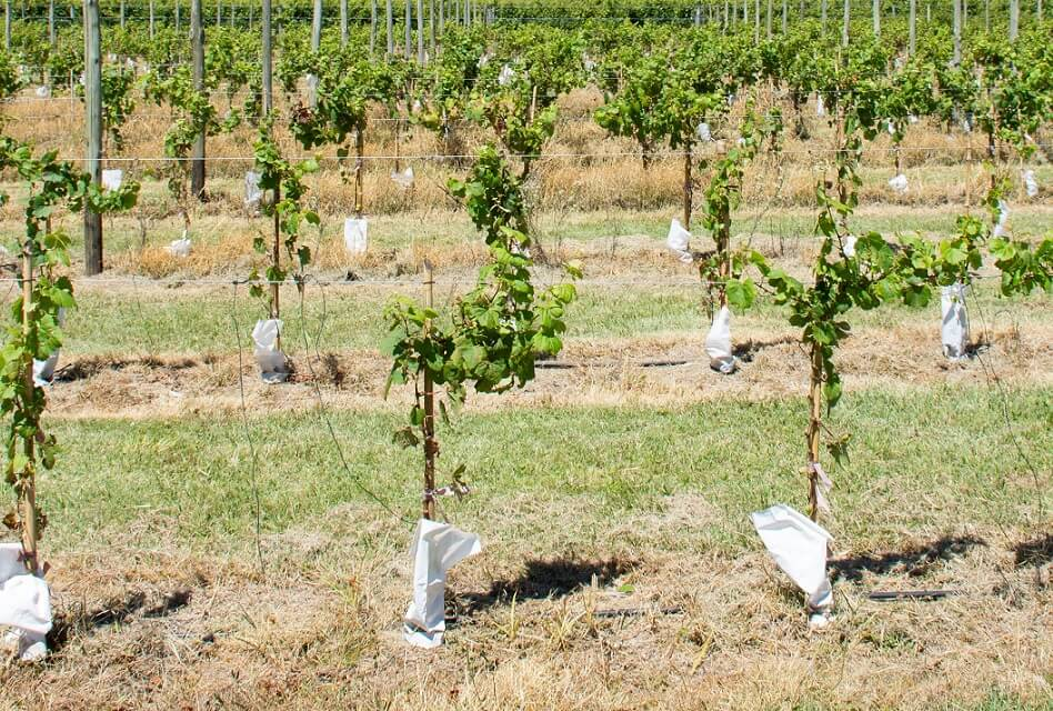 What Is Terroir and How Does It Affect Wine?