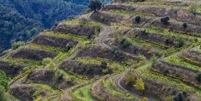 Priorat Wine Region with Grenache Plantings