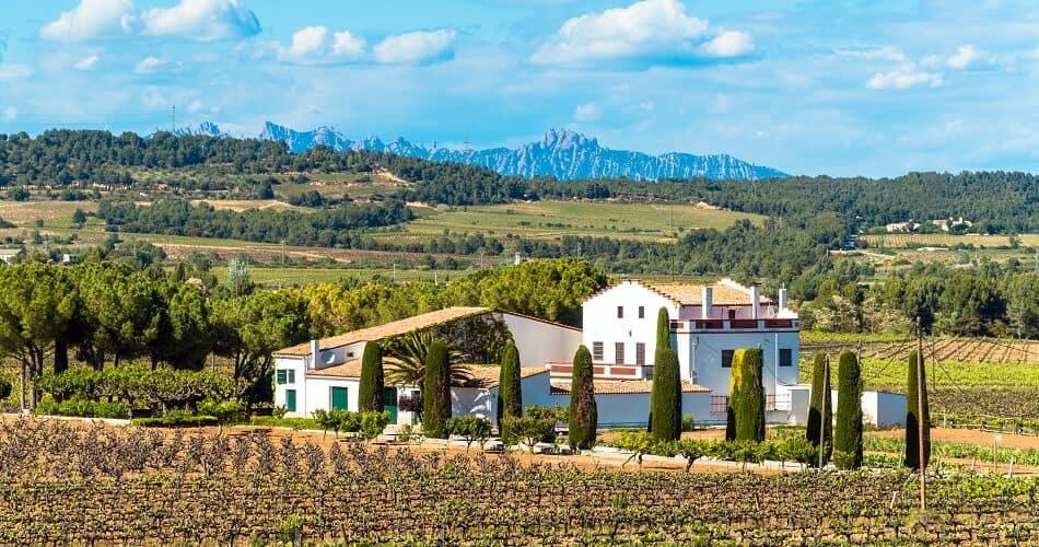 Vineyard in the Penedès Region in Catalonia, Spain