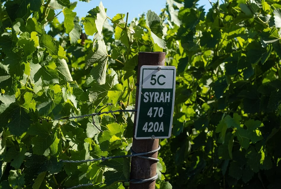 Syrah vs. Shiraz – What is the Difference?